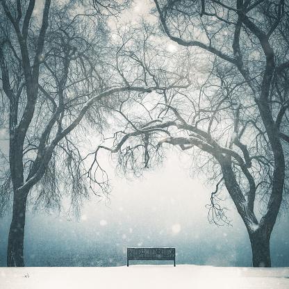 雪が降る「Empty Park Bench In Winter Scenic With Tall Bare Trees」:スマホ壁紙(1)