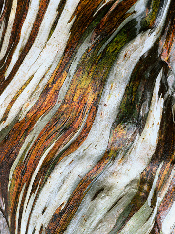 Plant Bark「Bark of a Snow Gum Tree」:スマホ壁紙(9)