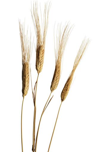 Wheat「Wheat Stalks」:スマホ壁紙(19)