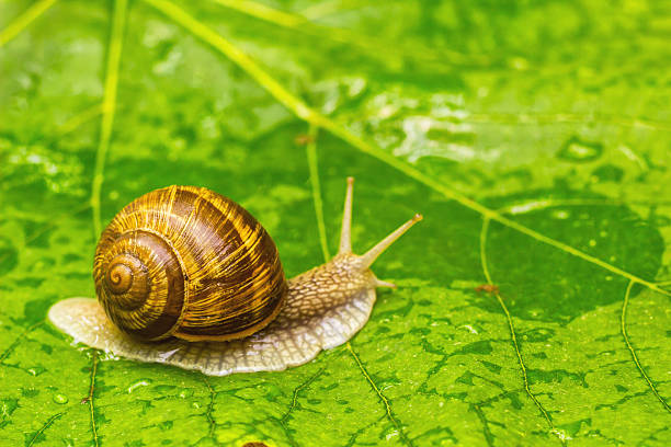 Snail on green leaf:スマホ壁紙(壁紙.com)