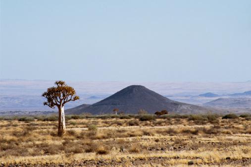 African Aloe「Quiver tree near Fish River Canyon , Namibia」:スマホ壁紙(8)