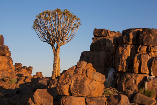African Aloe「Quiver Tree And Rock Wall At Sunset」:スマホ壁紙(12)