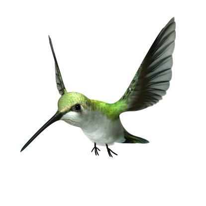Animal Body Part「A green hummingbird flying on white」:スマホ壁紙(16)