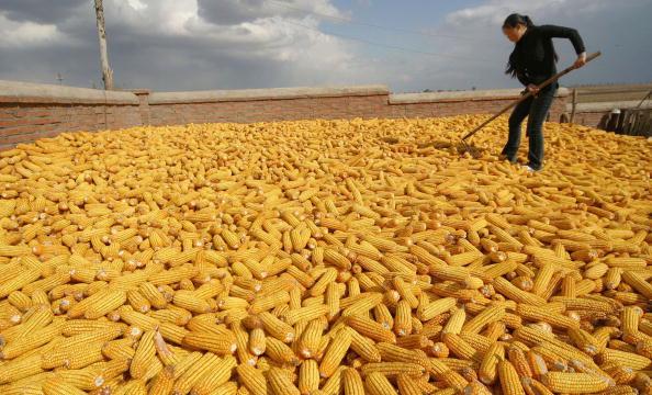 Rural Scene「Farmers Harvest Corn In Jilin Province」:写真・画像(11)[壁紙.com]