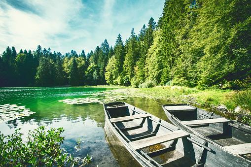 常緑樹「Wonderful old weathered boat on riverbank of small altitude french Genin lake in middle of pine forest in Jura mountains」:スマホ壁紙(19)