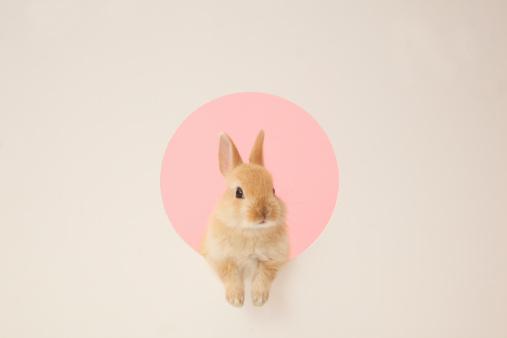 うさぎ「rabbit in a hole」:スマホ壁紙(19)