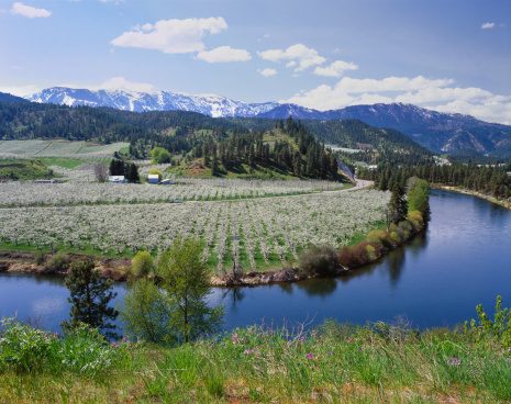 Wenatchee National Forest「Orchards in bloom in the spring.」:スマホ壁紙(1)