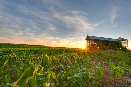 農業「Cornfield と穀物ビンの夕暮れ」:スマホ壁紙(13)