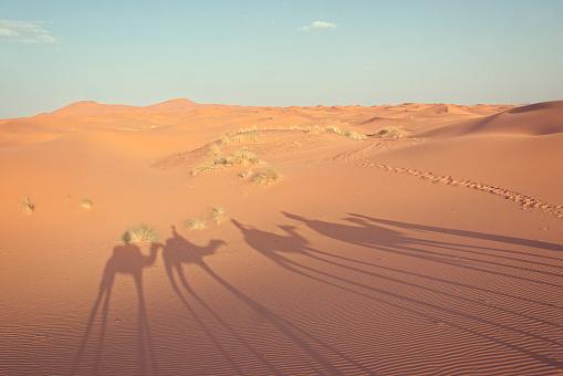 Working Animal「Camel train shadow in the desert, Marrakesh, Morocco」:スマホ壁紙(17)