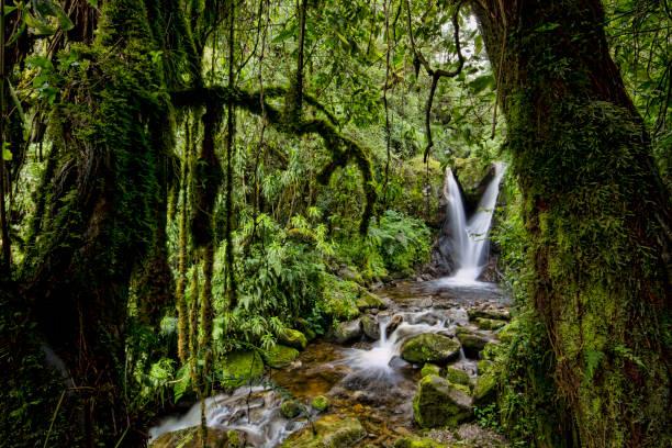Enocks Falls near Sine Hut, montane forest vegetation zone, Kilembe Route, Rwenzori National Park, Kasese District, Uganda:スマホ壁紙(壁紙.com)