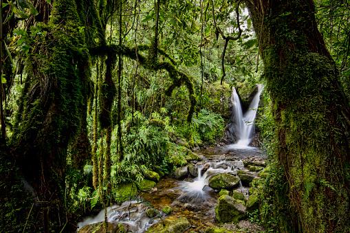 Shallow「Enocks Falls near Sine Hut, montane forest vegetation zone, Kilembe Route, Rwenzori National Park, Kasese District, Uganda」:スマホ壁紙(0)