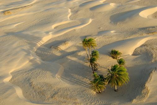 Desert Oasis「Tunisia, Douz, Sahara Desert, palm trees and sand dunes, aerial view」:スマホ壁紙(16)