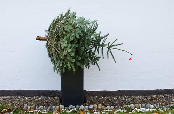Throwing out christmas tree:スマホ壁紙(壁紙.com)