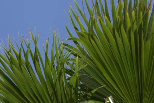 Frond「Palm fronds」:スマホ壁紙(4)