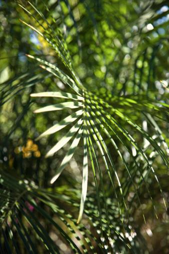 Frond「Palm fronds」:スマホ壁紙(2)