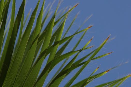 Frond「Palm fronds」:スマホ壁紙(5)