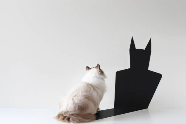 Conceptual ragdoll cat looking at bat shadow:スマホ壁紙(壁紙.com)