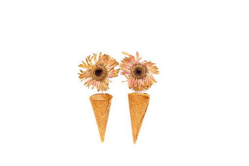 flower「Conceptual ice-cream cones made with flowers」:スマホ壁紙(12)