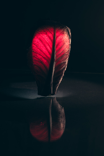 Heart「Conceptual heart」:スマホ壁紙(0)