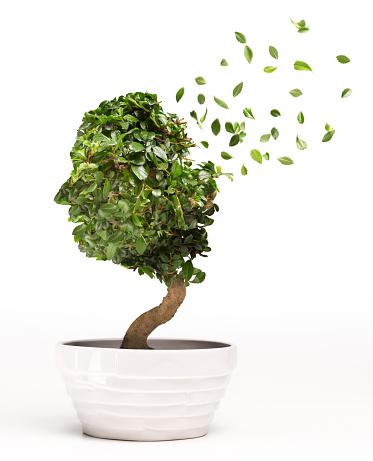 Single Tree「Conceptual image of Bonsai tree depicting Alzheime」:スマホ壁紙(14)