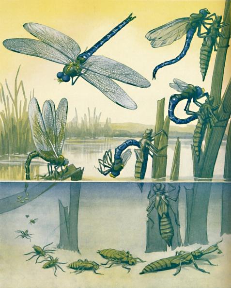 とんぼ「The Beautiful Dragonflys Life Story 1」:写真・画像(5)[壁紙.com]