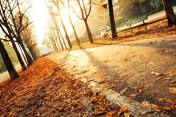 Empty sidewalk on an autumn morning:スマホ壁紙(壁紙.com)