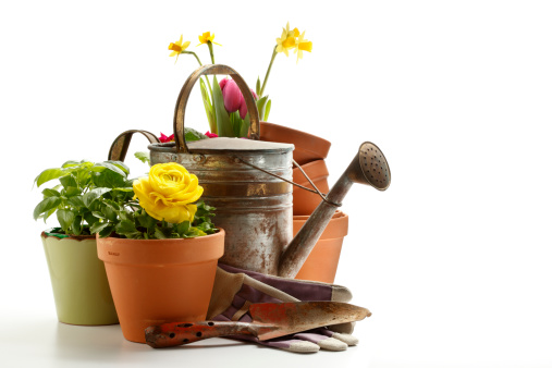 Gardening「Gardening」:スマホ壁紙(4)