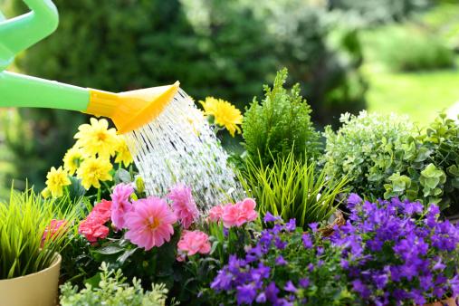 Flower Pot「Gardening」:スマホ壁紙(13)