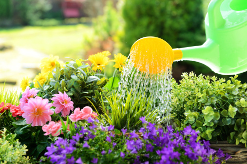Planting「Gardening」:スマホ壁紙(12)