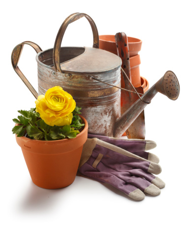Gardening「Gardening」:スマホ壁紙(2)