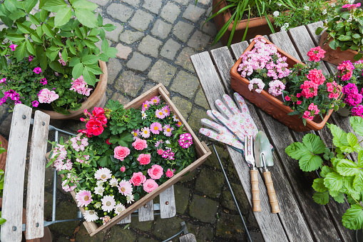 Planting「Gardening, planting of summer flowers, rosy and pink colour selection, wooden box」:スマホ壁紙(7)