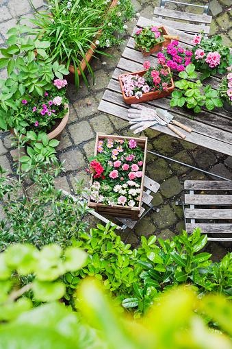 Protective Glove「Gardening, planting of summer flowers」:スマホ壁紙(5)