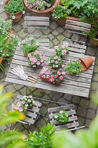 ペチュニア「Gardening, planting of summer flowers」:スマホ壁紙(7)