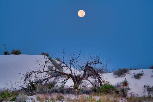月「Moonset Over Dead Snag」:スマホ壁紙(1)