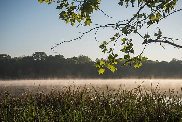 Mist arises from Sally Jones Lake on a spring morning:スマホ壁紙(壁紙.com)
