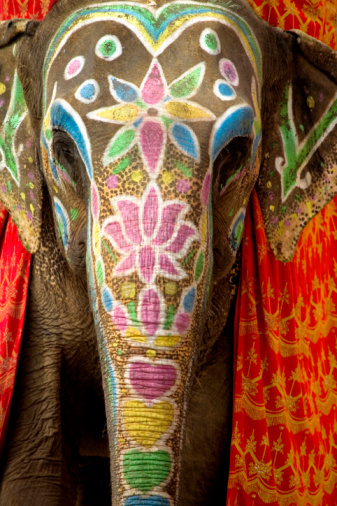 Rajasthan「Decorated and painted elephant, front view」:スマホ壁紙(9)