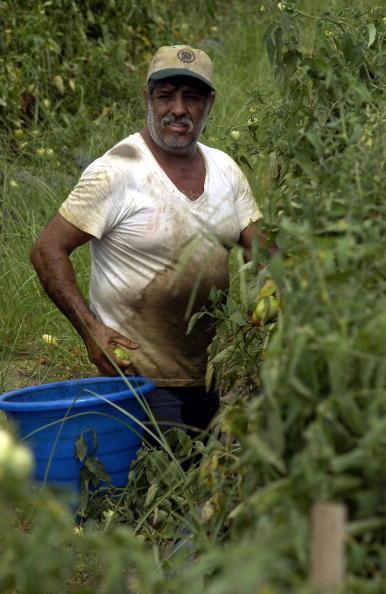 Naples - Florida「Migrant Farmers Pick Produce In South Georgia」:写真・画像(19)[壁紙.com]