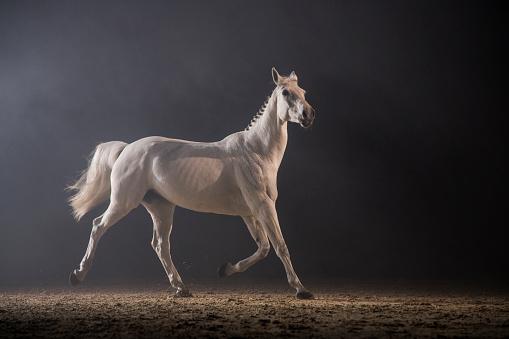 Stallion「Horse glory」:スマホ壁紙(10)