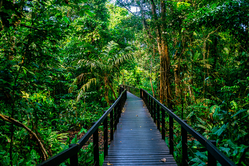 Central America「Costa Rica, Limon, Wooden pathway in Cahuita National Park」:スマホ壁紙(5)