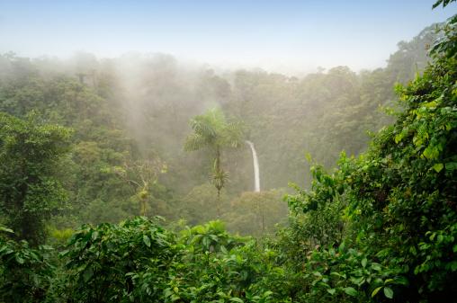 Central America「Costa Rica Rain Forest」:スマホ壁紙(2)