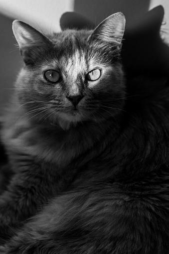 Mixed-Breed Cat「Cat serious and joking」:スマホ壁紙(0)
