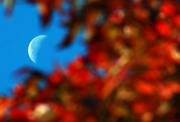 葉・植物「Autumn Colours Throughout The UK」:写真・画像(9)[壁紙.com]