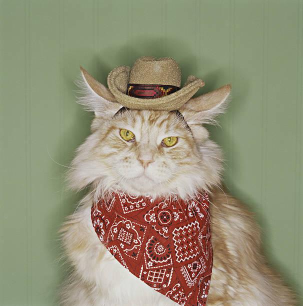 Cat in cowboy dress-up:スマホ壁紙(壁紙.com)