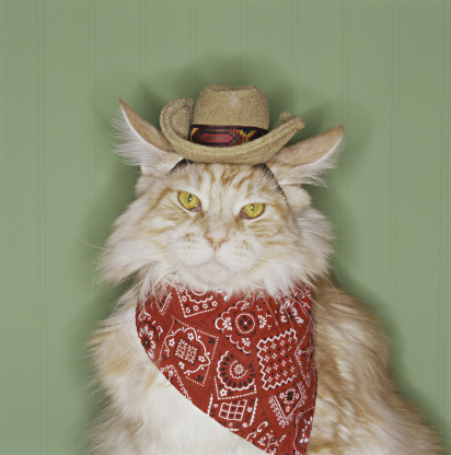 Clothing「Cat in cowboy dress-up」:スマホ壁紙(13)