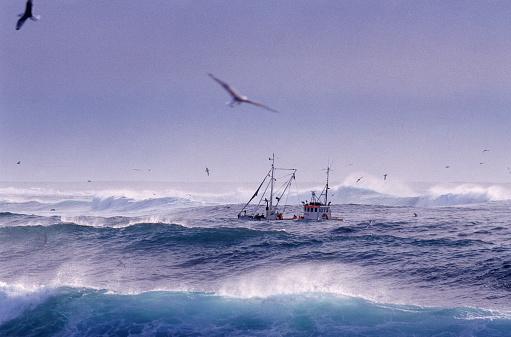 Seagull「Trawler in High Seas」:スマホ壁紙(12)