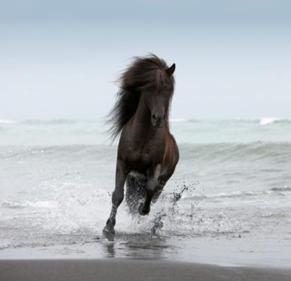 Horse「Stallion running on Beach」:スマホ壁紙(11)