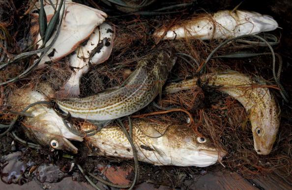 Fisherman「Baltic Sea Fishermen Face Uncertain Future」:写真・画像(15)[壁紙.com]