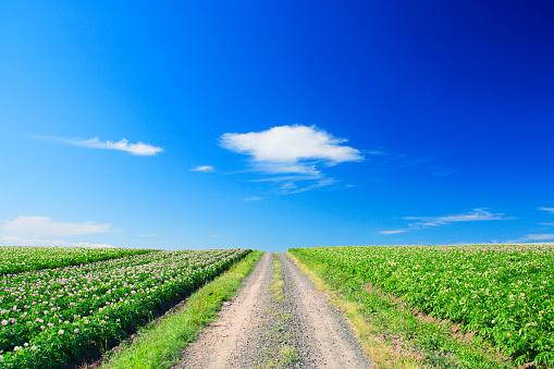 Hokkaido「Single Track Through Potato Fields」:スマホ壁紙(16)