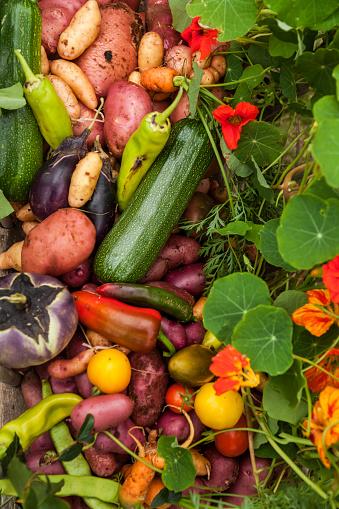豊富「Different organic vegetables」:スマホ壁紙(4)