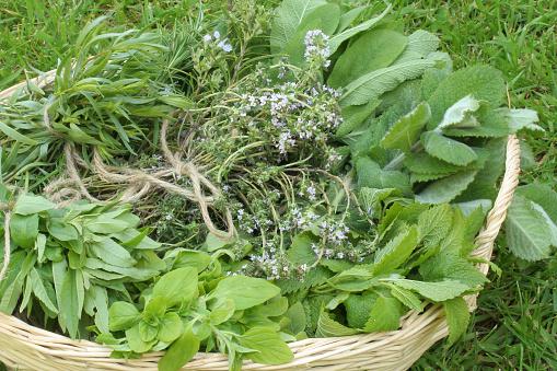 Tarragon「Herb basket」:スマホ壁紙(8)